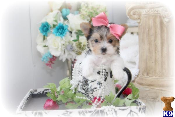 BeautifulPuppies Picture 2
